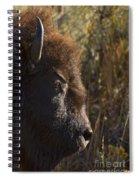 Buffalo   #9242 Spiral Notebook