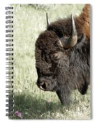 Buffalo Spiral Notebook