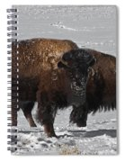 Buffalo In Snow Spiral Notebook
