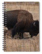 Buffalo Of Antelope Island Iv Spiral Notebook