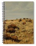 Buffalo On The Prairie Spiral Notebook