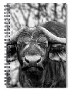 Buffalo Stare In Black And White Spiral Notebook
