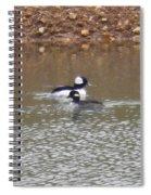 Buffleheads 1 Spiral Notebook