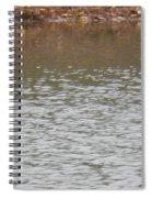 Buffleheads 4 Spiral Notebook