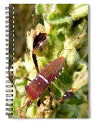 Bug On Stalk Of The Wooly Mullein Spiral Notebook