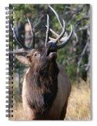 Bugle Spiral Notebook