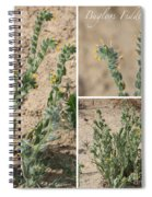 Bugloss Fiddleneck Collage Spiral Notebook
