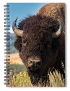 Bull Bison Spiral Notebook