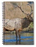 Bull Elk Crossing River Spiral Notebook