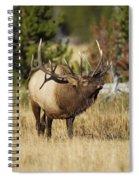 Bull Elk II Spiral Notebook