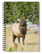 Bull Elk IIII Spiral Notebook
