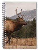 Bull Elk Spiral Notebook