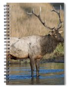 Bull Elk On The Madison River Spiral Notebook