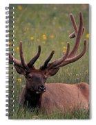 Bull Elk Resting Spiral Notebook