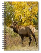 Bull Elk With Autumn Colors Spiral Notebook