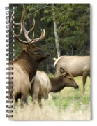 Bull Elk With His Harem Spiral Notebook