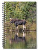 Bull Moose 3 Spiral Notebook