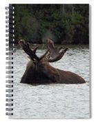 Bull Moose - 3587 Spiral Notebook