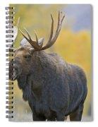 Bull Moose In Autumn Spiral Notebook