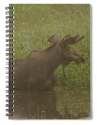 Bull Moose Looking Around  Spiral Notebook