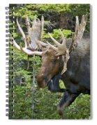 Bull Moose Shedding Velvet Spiral Notebook