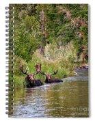 Bull Moose Summertime Spa Spiral Notebook