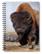Bull Strut Spiral Notebook