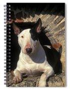 Bull Terrier Dog Spiral Notebook