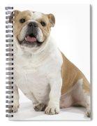 Bulldog, Female Spiral Notebook