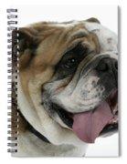 Bulldog, Male Panting Spiral Notebook
