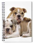 Bulldog Puppies, One On Top Of The Other Spiral Notebook
