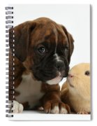 Bulldog Puppy With Yellow Guinea Pig Spiral Notebook