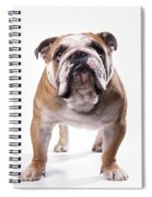 Bulldog Standing, Facing Camera Spiral Notebook