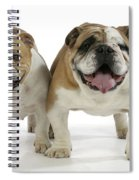 Bulldogs, Male And Female Spiral Notebook