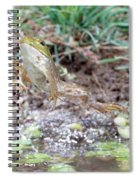 Bullfrog Leaping Spiral Notebook