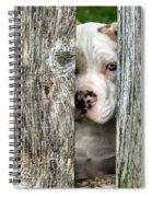 Bull's Eye - English Bulldog Spiral Notebook