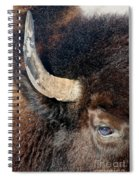 Bull's Eye Spiral Notebook