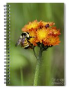 Bumble And Hawk Spiral Notebook