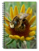 Bumble Bee Beauty Spiral Notebook