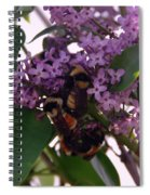 Bumble Bees In Flowers Spiral Notebook