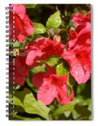 Bumble In Flight Spiral Notebook