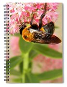 Bumblebee Clinging To Sedum Spiral Notebook