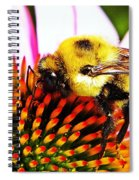 Bumblebee On Echinacea  Spiral Notebook