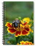 Bumblebee On Marigold Spiral Notebook