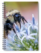 Bumblebee On Thistle Blossom Spiral Notebook