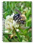 Bumblebee On White Clover Spiral Notebook
