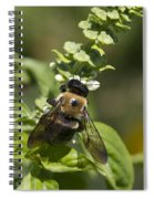 Bumblebees And Basil Spiral Notebook