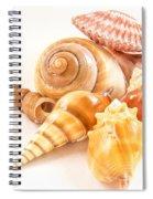 Bunch Of Shells Spiral Notebook