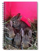 Bunnies In Pink Spiral Notebook