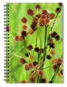 Bur-reed Spiral Notebook